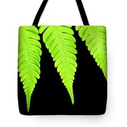Fern Isolated On Black Background Tote Bag