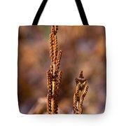 Fern Spore Stalk In Morning Sun Tote Bag