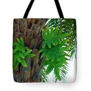 Ferns 1 Tote Bag