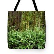 1a2912-ferns In Rain Forest Canada  Tote Bag