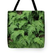 D3b6333-ferns In Sonoma 2  Tote Bag