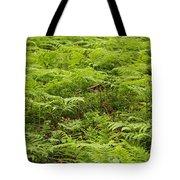 Ferns In Summer Tote Bag