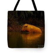 Ferrell Hog At Sunrise Tote Bag