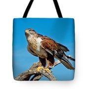 Ferruginous Hawk About To Take Tote Bag