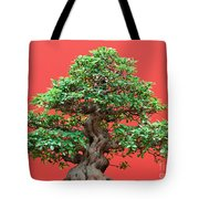Ficus Bonsai Tote Bag