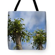Ficus Leaves Against The Sky Tote Bag