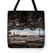 Ficus Magnonioide In The Alameda De Apodaca Cadiz Spain Tote Bag