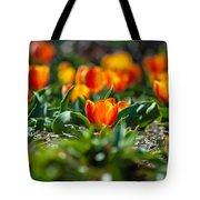 Field Of Orange Tulips Tote Bag