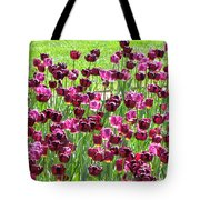 Field Of Purple Tulips 1 Tote Bag