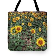 Field Of Sunflowers Tote Bag by Adrian Evans