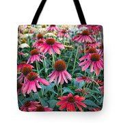 Fields Of Coneflower Tote Bag