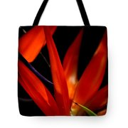 Fiery Red Bird Of Paradise Tote Bag