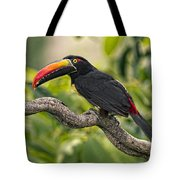 Fiery Tailed Aracari Toucan Out On A Limb Tote Bag