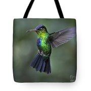 Fiery-throated Hummingbird..  Tote Bag
