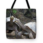 Fighting Galapagos Giant Tortoises Tote Bag