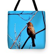 Finch On Branch 031015a Tote Bag