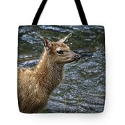 Firehole River Elk Fawn Tote Bag