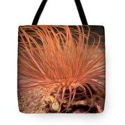 Firework Anemone Tote Bag