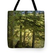 Firs And Ferns Tote Bag