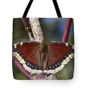 First Butterfly Of Spring Tote Bag