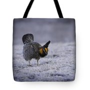 First Light 2 Tote Bag