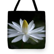 First Light's Breath Tote Bag