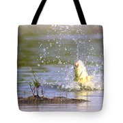 Fish-img-0717-004 Tote Bag