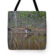 Fishing Feline Tote Bag by Al Powell Photography USA