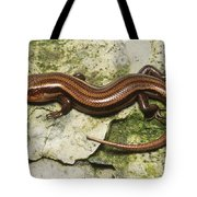 Five-lined Skink Tote Bag