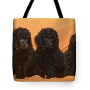 Five Poodle Puppies  Tote Bag