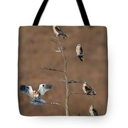Five White-tailed Kite Siblings Tote Bag