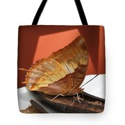 Flame-bordered Charaxes Butterfly #2 Tote Bag