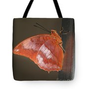 Flame-bordered Charaxes Butterfly #3 Tote Bag