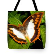 Flame Bordered Charaxes Butterfly Tote Bag