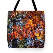 Flaming Maple Beneath The Pines Tote Bag