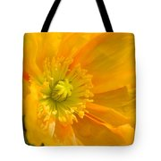 Flaming Yellow Poppy  Tote Bag