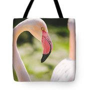 Flamingo Bird Portrait. Tote Bag