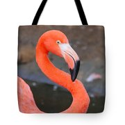 Flamingo Close Up Tote Bag