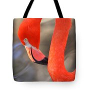 Flamingo Curves Tote Bag