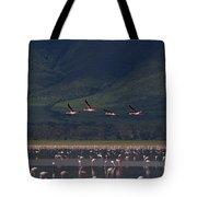 Flamingos  #6590 Tote Bag