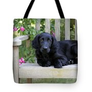 Flat-coated Retriever Puppy Tote Bag
