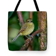 Flavescent Flycatcher Tote Bag