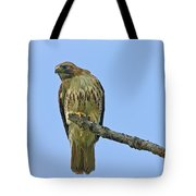 Fledged Red Tailed Hawk Tote Bag