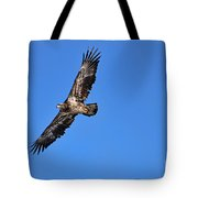 Fledgling Bald Eagle 5048 Tote Bag