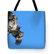 Fledgling Bald Eagle 5078 Tote Bag
