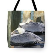 Florida Brown Pelicans Tote Bag by Tracy L Teeter