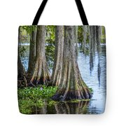 Florida Cypress Trees Tote Bag
