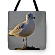 Florida Gull Tote Bag