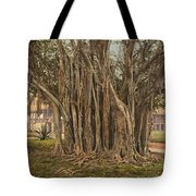 Florida Rubber Tree, C1900 Tote Bag