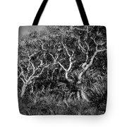 Florida Scrub Oaks Painted Bw  Tote Bag